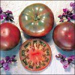Cherokee Lila paradicsom