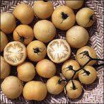 Wapsipinicon Peach paradicsom