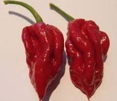 Naga Viper chili paprika mag