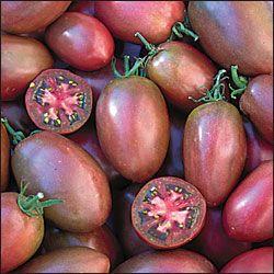 Purple Russian paradicsom