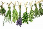 Gyógynövények - a természet doktorai
