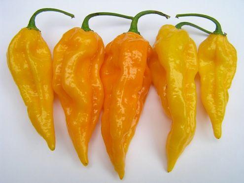 Bih Jolokia Yellow chili paprika mag
