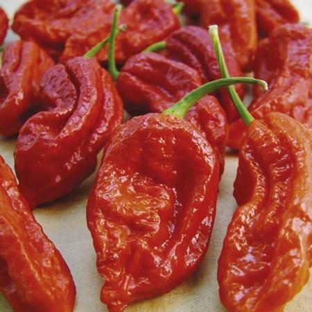 Bih Jolokia chili paprika mag